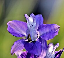 Afternoon Rays by aprilann