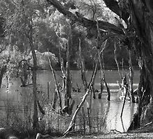 Bird Sanctuary, Bayswater, Western Australia #5 by Elaine Teague