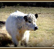 Cow at Majors Creek by Jason Scott