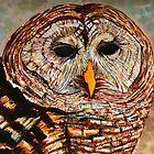 The Owl by Nira Dabush