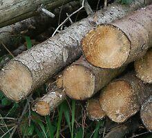 Holz by Katharina Vasicek