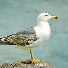 Lesser Black-backed Gull by Margaret S Sweeny