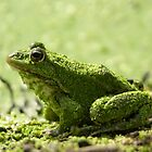 Green slimy frog by Lisa Kyle Young