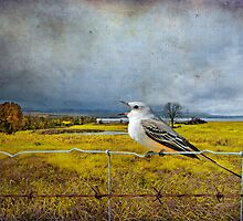 Scissor Tail Flycatcher in the Countryside by Bonnie T.  Barry