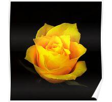 Yellow Rose Portrait. Poster