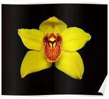 Yellow Cymbidium Portrait #2. Poster