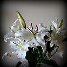 Lilies by karolina