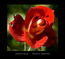French Petals - - Posters & More by Maria A. Barnowl