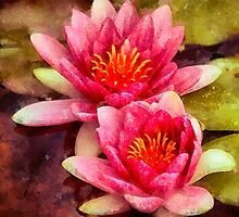 Pink Water Lilies by Chris Thaxter