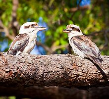 Kookaburras in an old gum tree by Cathryn O'Donnell