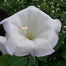 White Flower by jesusmyjoy