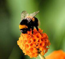 Mmm Orange Flavoured Pollen by MichelleKeohane