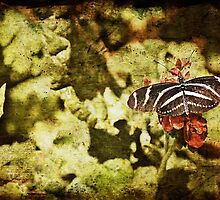 Dark View of Butterfly by photecstasy