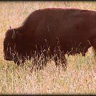 Buffalo Bill by Mechelep