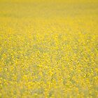 Yellow Field by goddarb