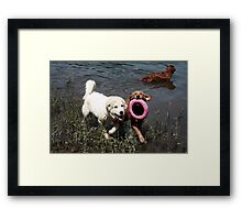 Best Friends Fetching Team Framed Print