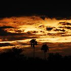 Estero Llano Grande Sunset by Jennifer Suttle