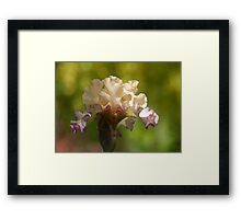 Within and beyond a dream is iris   Framed Print