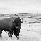 Power of the Prairie by Nate Welk