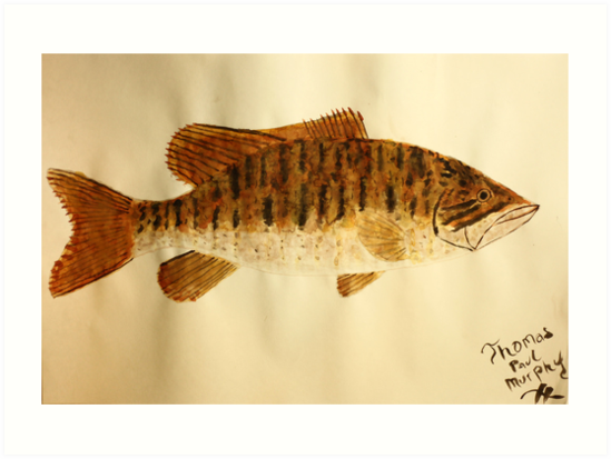 Smallmouth Bass by Thomas Murphy