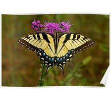 Yellow Tiger Swallowtail. Poster