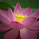 Lotus Charm by Kyle McLeod