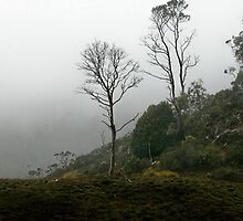 Foggy Morning, Cradle Mountain, Tasmania, Australia. by kaysharp
