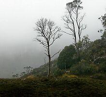 Foggy Morning, Cradle Mountain, Tasmania, Australia. by kaysharp