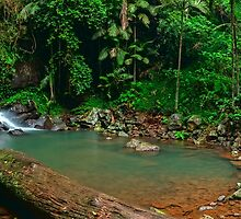 Curtis Falls - Mt Tamborine by Mark  Lucey