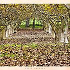 Apple Orchard near Mt. Gambier by Ginter