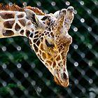Giraffe by Kathy Weaver