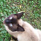 The Cat's Eye by jesusmyjoy