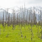the ghost forest by helveticaneue