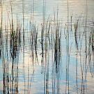 Grasses in the Sky by John Dunbar
