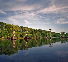 Blue Cypress Lake #3. by chris kusik