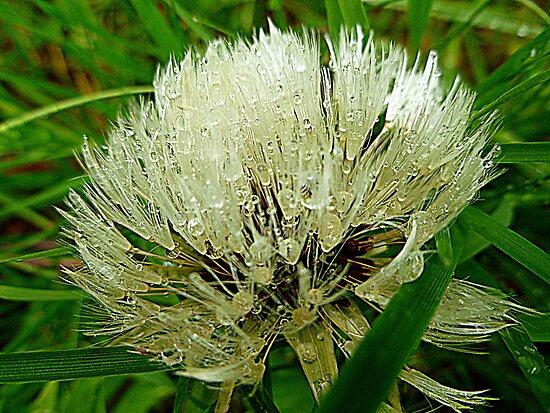 Dandelion Gems by Elaine Bawden