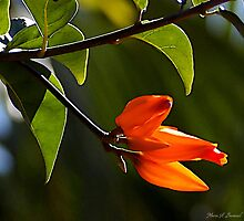 Vibrant Orange by Maria A. Barnowl