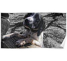 Benson muddy again Poster