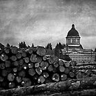 Olympia Log Pile by Lynnette Peizer