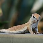Yoga Ground Squirrel Style  by Saija  Lehtonen