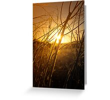 Tangled Up In Sunset Greeting Card