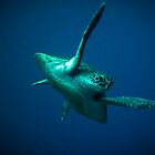 Sea Turtle by Christopher Meo
