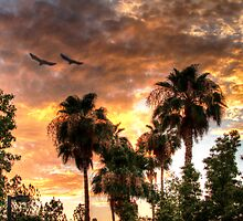 Balmy Desert Sunset by George Lenz