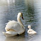 Swans by Aase