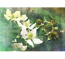 Raspberry wanna be ;) Photographic Print