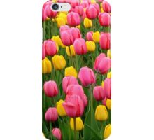 Tulips 1 iPhone Case/Skin