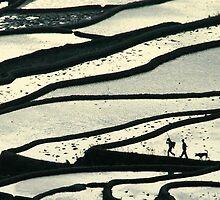 Terraces by yixiangchen