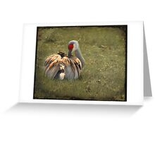 Beauty Rest ~ Greeting Card