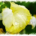 Delicate Yellow Flower With Dew Drops by MissDawnM