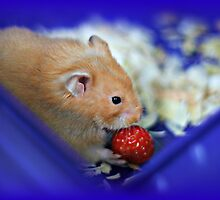 Twinkie eating a strawberry by AngieBanta